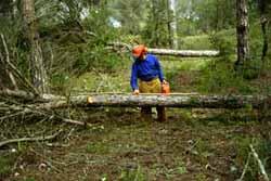 Imagen de trabajador de la madera