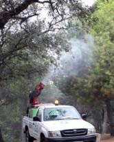 Combatimos la procesionaria de piño en las zonas más visitadas de Andalucía