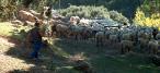 Mantenimiento de cortafuegos con pastoreo controlado a través del programa Rapca