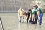 Reintroducción de 30.000 truchas en ríos de Espacios Naturales de Andalucía
