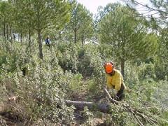 Actuaciones selvícolas para mejora de la biodiversidad en 6 provincias andaluzas